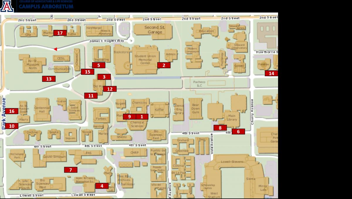 university of phoenix campus map Heritage Trees On The Ua Campus University Of Arizona Campus Arboretum university of phoenix campus map