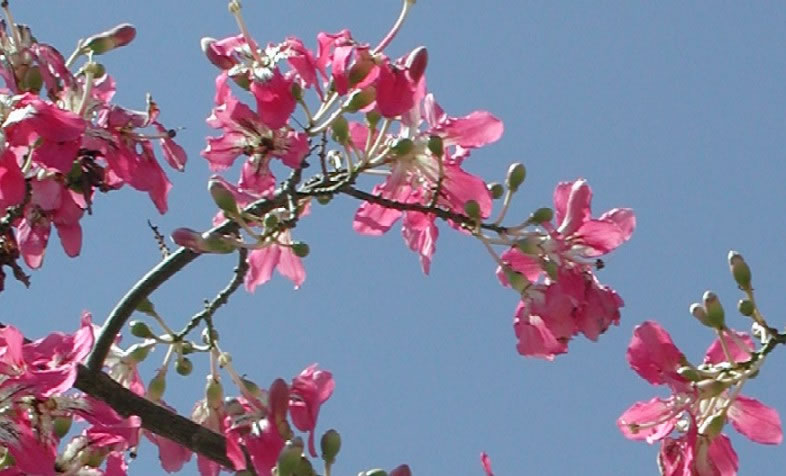 Floss Silk Tree With Pink Flowers Border Style Solid Padding 5px