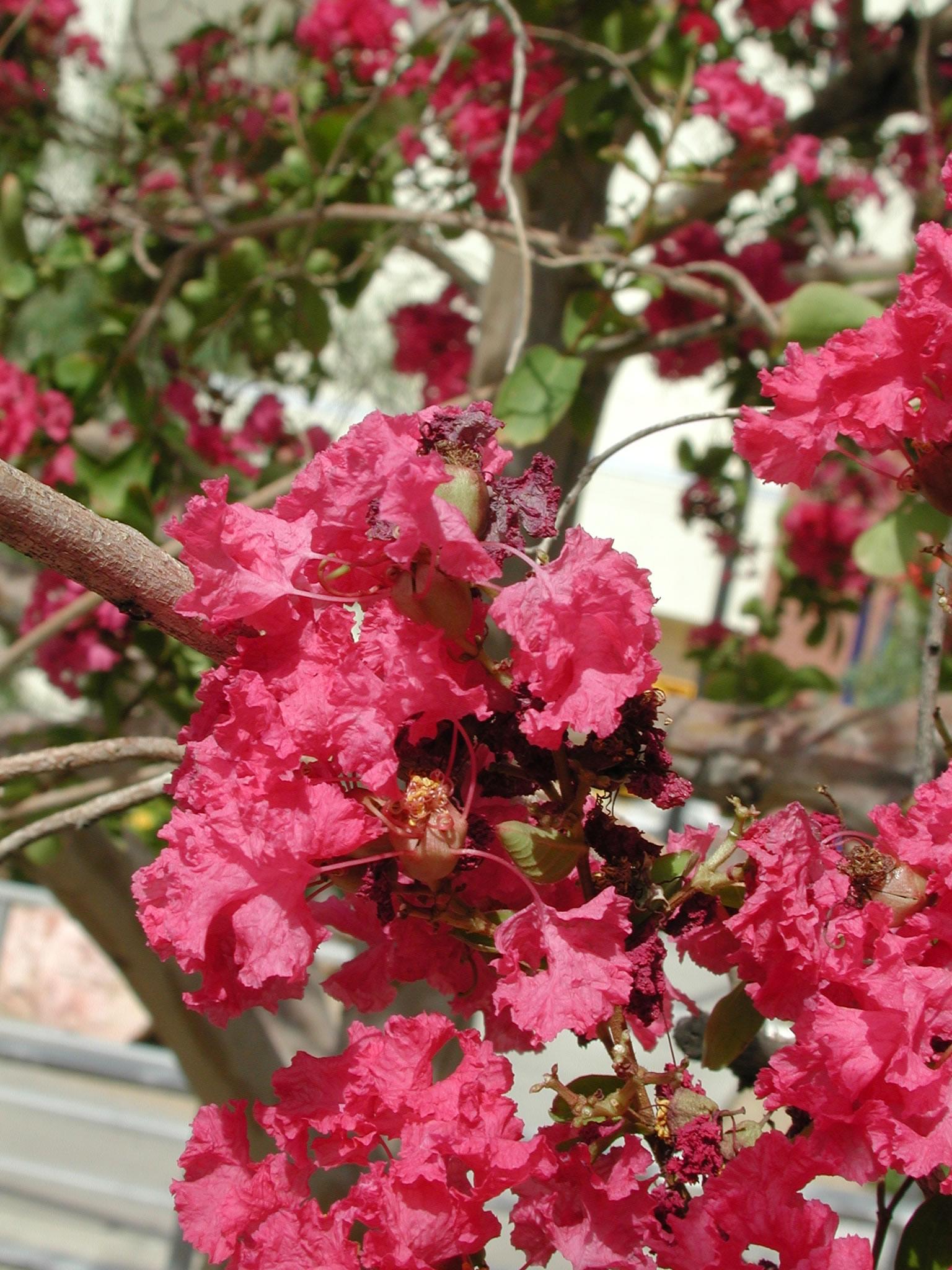 monsoon season university of arizona campus arboretum